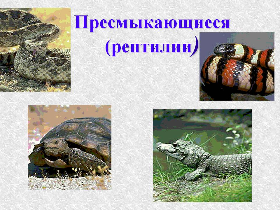 рептил11.jpg