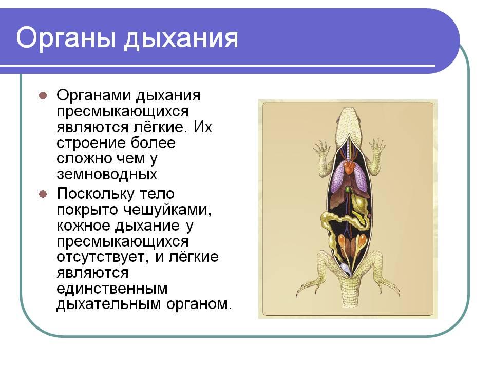 C:\Documents and Settings\Admin\Мои документы\Мои рисунки\рептил8.jpg