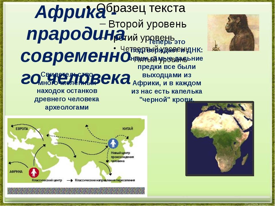 Африка - прародина современного человека Свидетельство многочисленных находо...