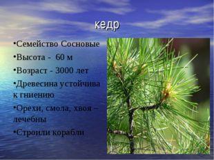 кедр Семейство Сосновые Высота - 60 м Возраст - 3000 лет Древесина устойчива