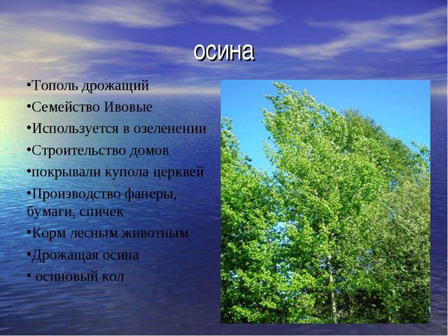 осина Тополь дрожащий Семейство Ивовые Используется в озеленении Строительств...