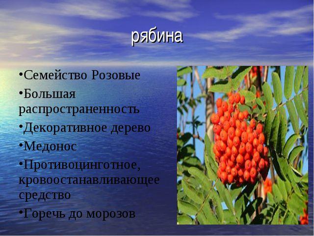 рябина Семейство Розовые Большая распространенность Декоративное дерево Медон...