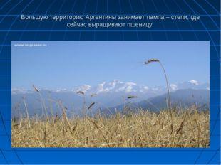 Большую территорию Аргентины занимает пампа – степи, где сейчас выращивают пш