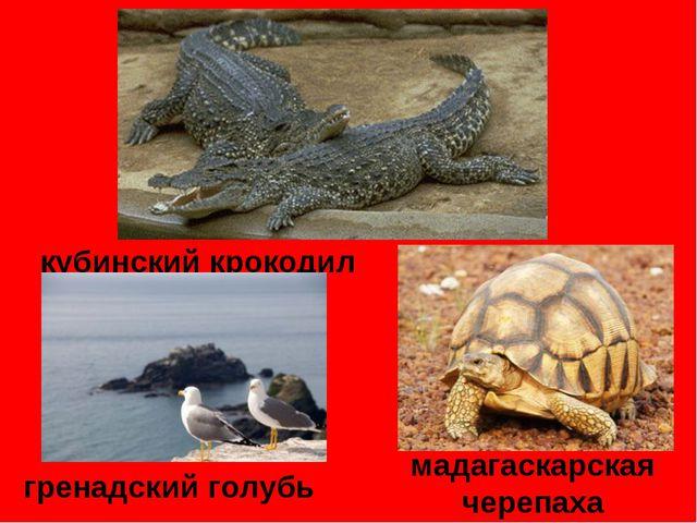 кубинский крокодил мадагаскарская черепаха гренадский голубь