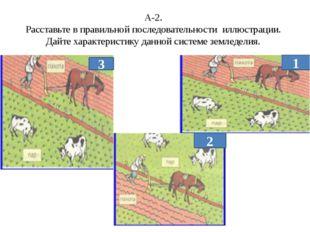 А-2. Расставьте в правильной последовательности иллюстрации. Дайте характерис