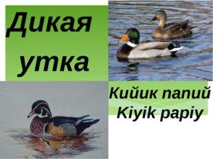Кийик папий Kiyik papiy Дикая утка