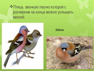 Птица, звонкую песню которой с росчерком на конце можно услышать весной. Зяб