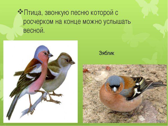 Птица, звонкую песню которой с росчерком на конце можно услышать весной. Зяб...