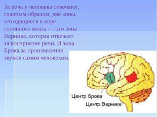 За речь у человека отвечают, главным образом, две зоны, находящиеся в коре го