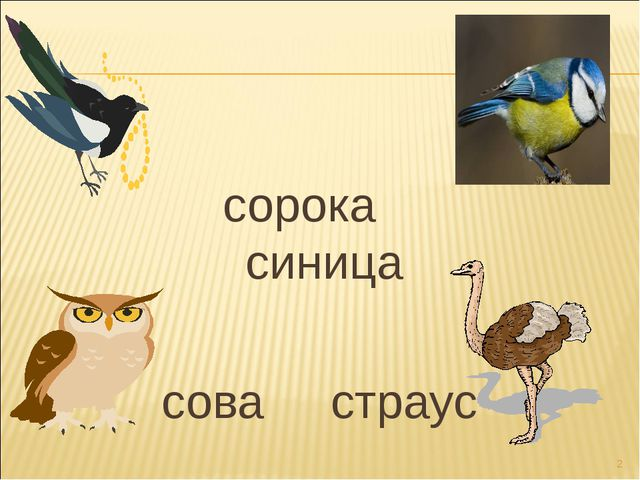 сорока синица сова страус *