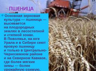 Основная зерновая культура— пшеница— высевается наплодородных землях влес
