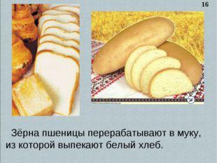Зёрна пшеницы перерабатывают в муку, из которой выпекают белый хлеб. 16