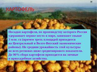Посадки картофеля, попроизводству которого Россия удерживает первое место в