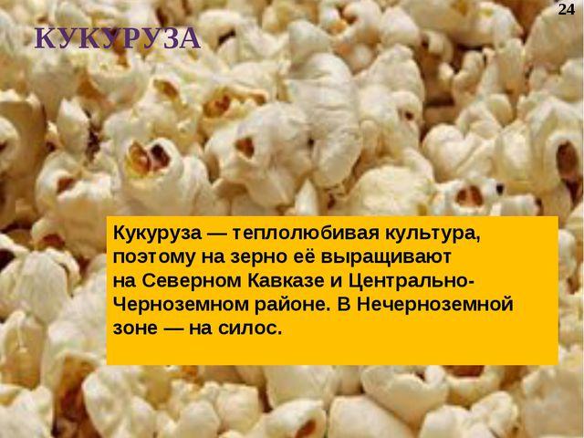 Кукуруза— теплолюбивая культура, поэтому назерно еёвыращивают наСеверном...