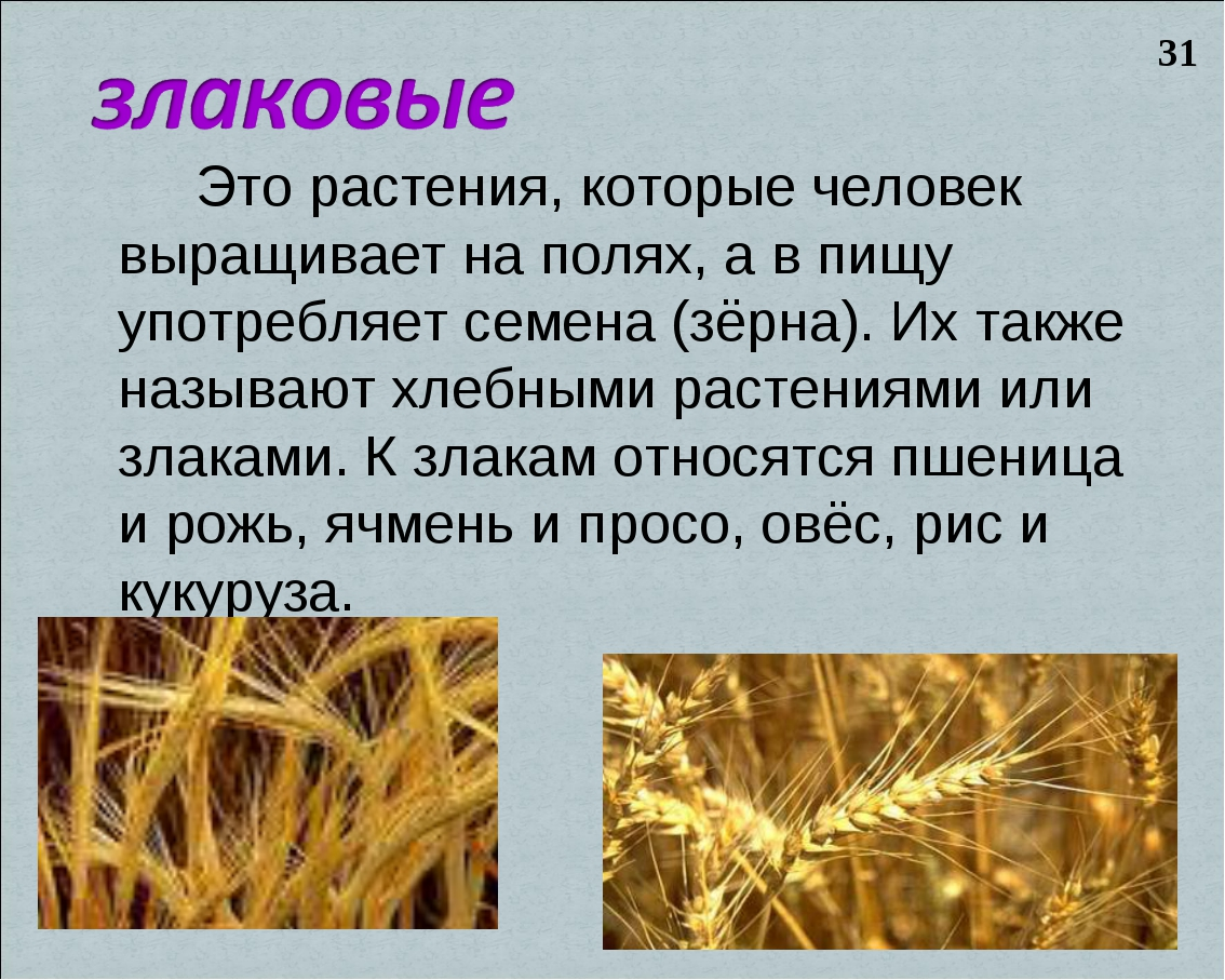 Это растения, которые человек выращивает на полях, а в пищу употребляет семе...