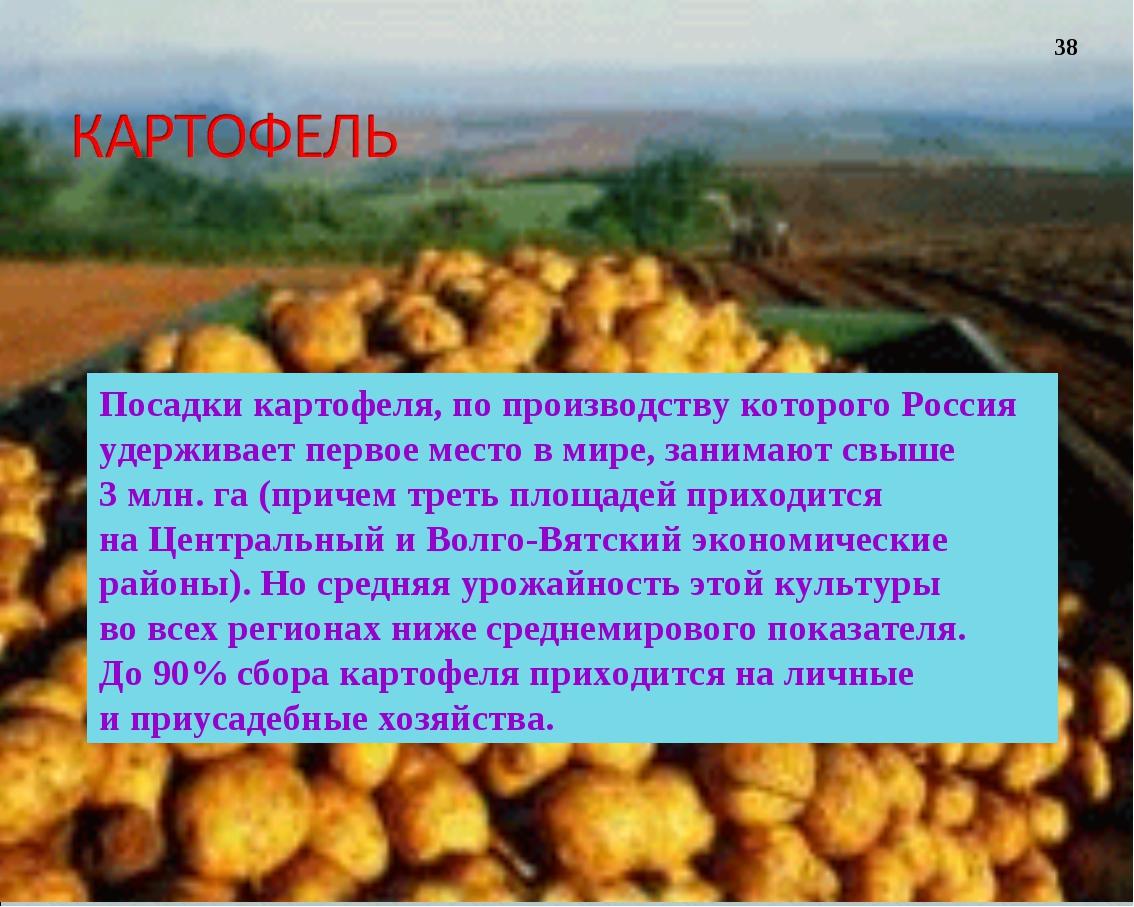 Посадки картофеля, попроизводству которого Россия удерживает первое место в...