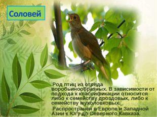 Род птиц из отряда воробьинообразных. В зависимости от подхода к классификац