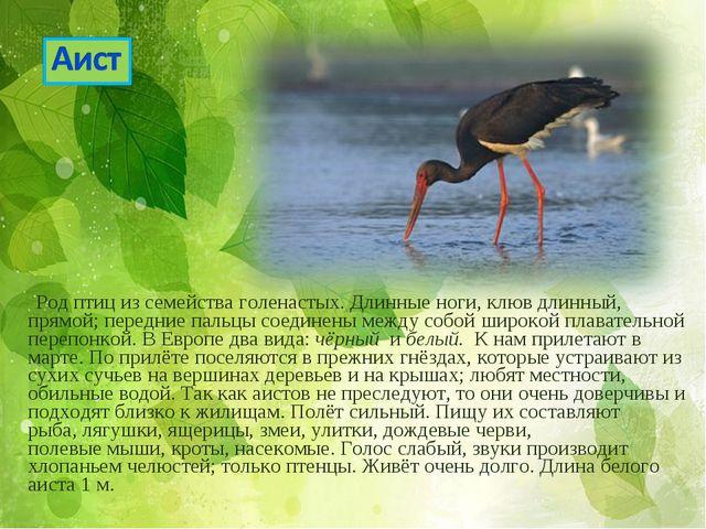 Род птиц из семейства голенастых. Длинные ноги, клюв длинный, прямой; передн...