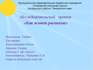 Муниципальное образовательное бюджетное учреждение «Покровская начальная школ