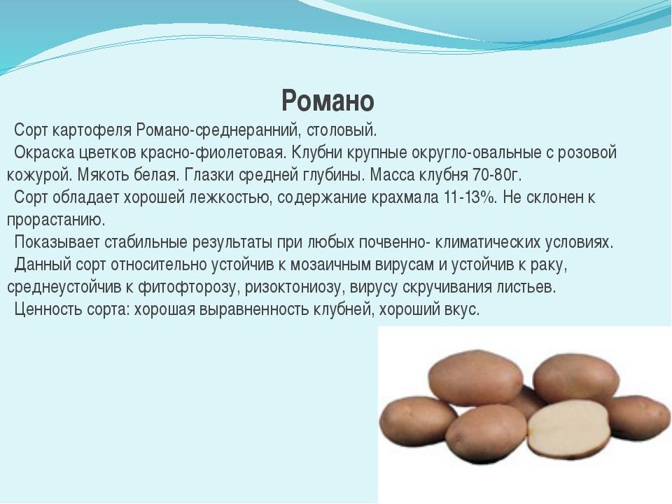 2. Посадка картофелядолжна обеспечивать равномерные всходы и рост растений,...