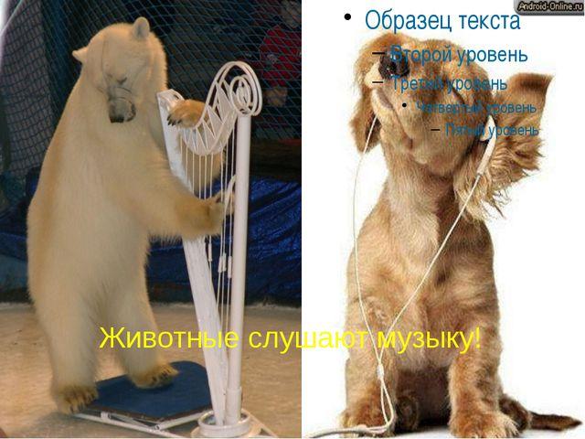 Животные слушают музыку!