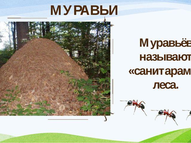 МУРАВЬИ Муравьёв называют «санитарами» леса.