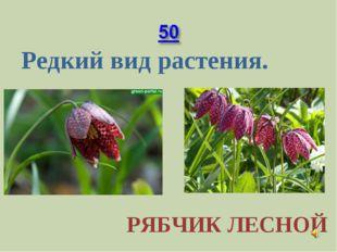Редкий вид растения. РЯБЧИК ЛЕСНОЙ