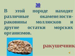 В этой породе находят различные окаменелости-раковины моллюсков и другие ост