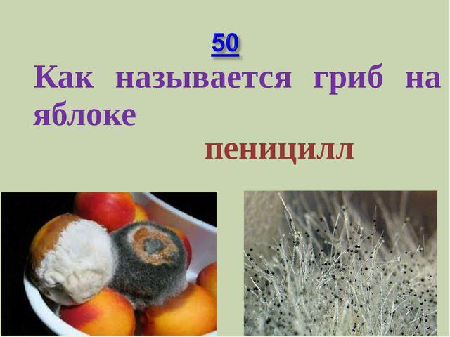 Как называется гриб на яблоке пеницилл