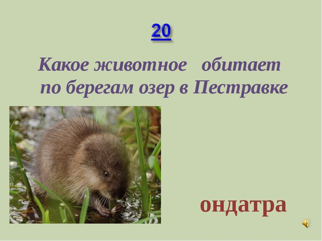 Какое животное обитает по берегам озер в Пестравке ондатра