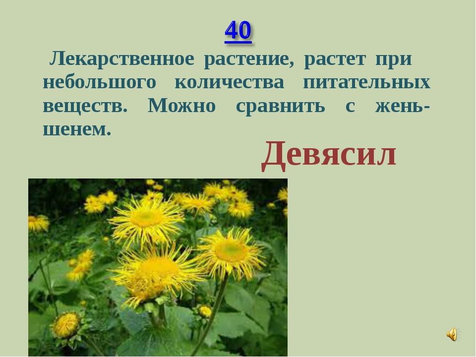 Лекарственное растение, растет при небольшого количества питательных веществ...