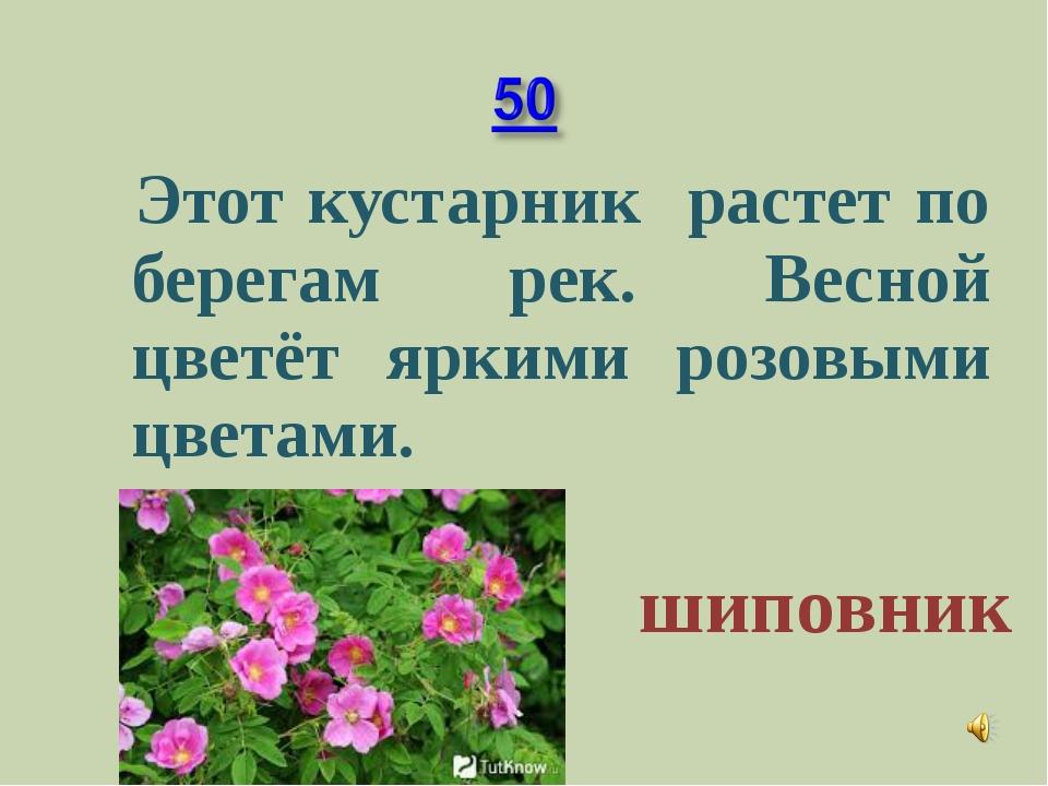 Этот кустарник растет по берегам рек. Весной цветёт яркими розовыми цветами....