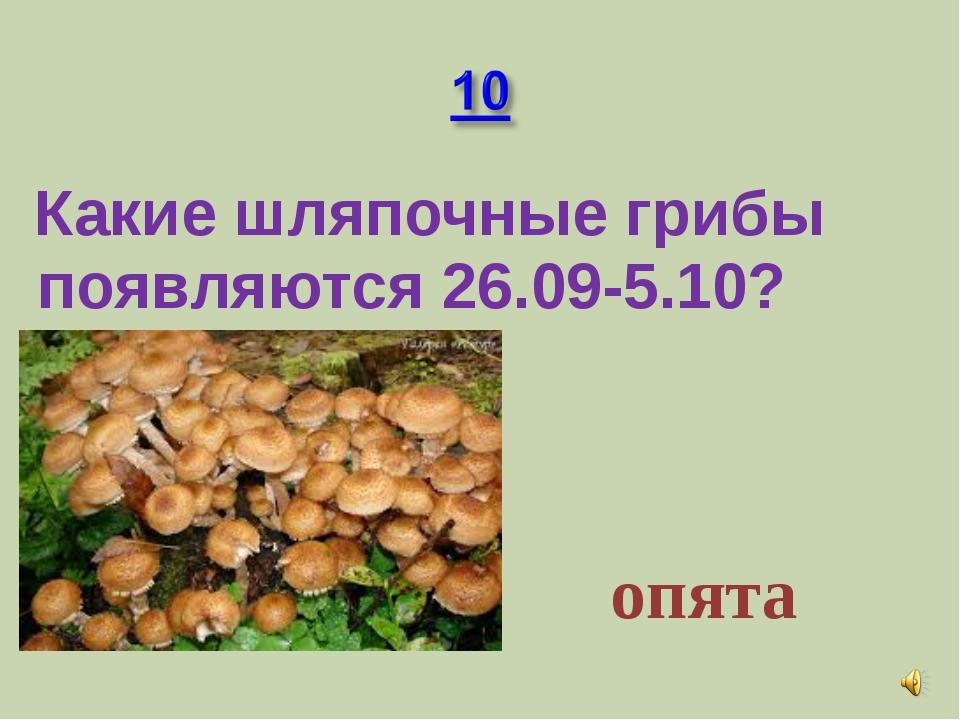 Какие шляпочные грибы появляются 26.09-5.10? опята