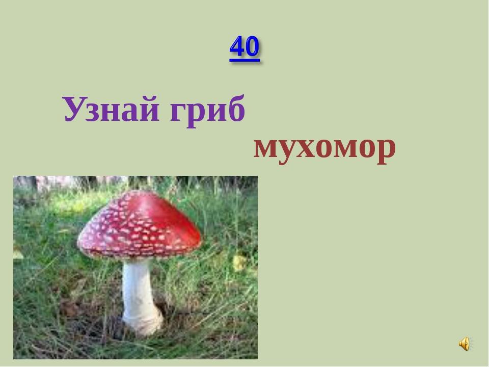 Узнай гриб мухомор