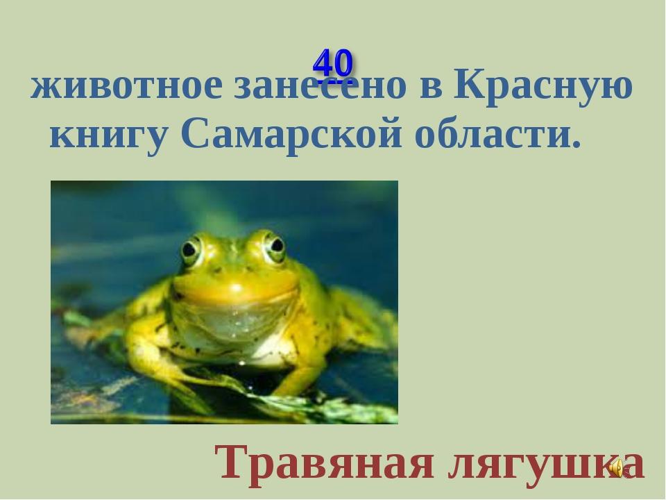 животное занесено в Красную книгу Самарской области. Травяная лягушка