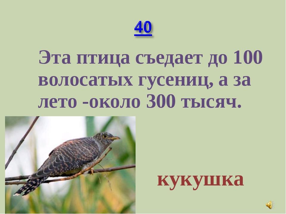 Эта птица съедает до 100 волосатых гусениц, а за лето -около 300 тысяч. куку...