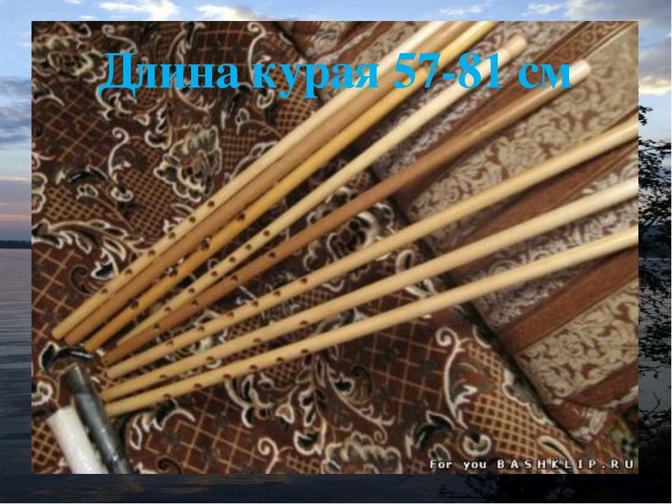 Длина курая 57-81 см