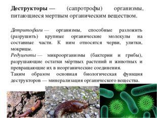 Детритофаги— организмы, способные разложить (разрушить) крупные органические