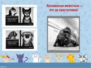 Брошенные животные — это не преступники!