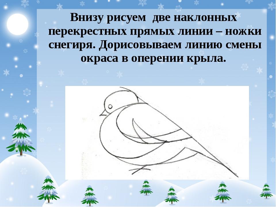 Внизу рисуем две наклонных перекрестных прямых линии – ножки снегиря. Дори...