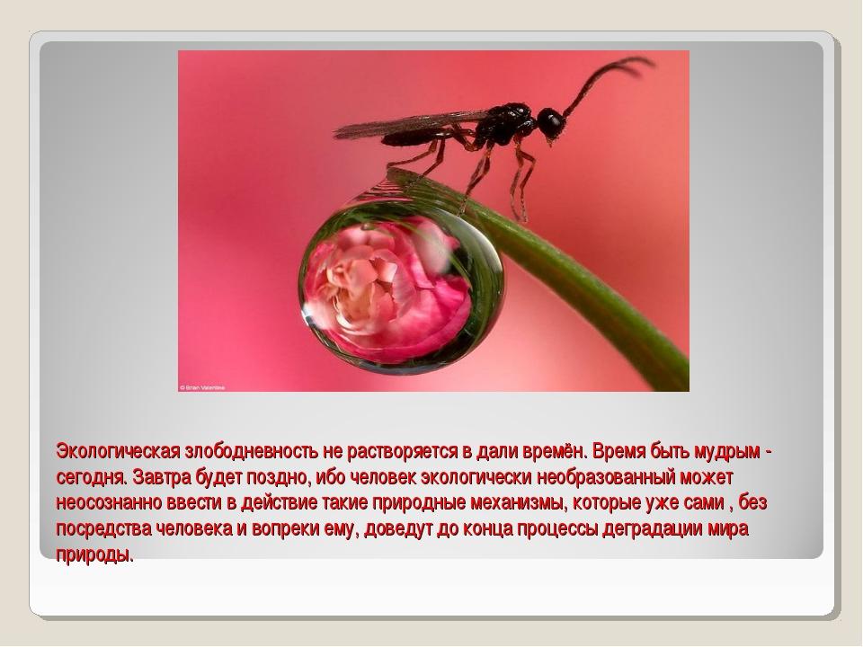 Экологическая злободневность не растворяется в дали времён. Время быть мудрым...