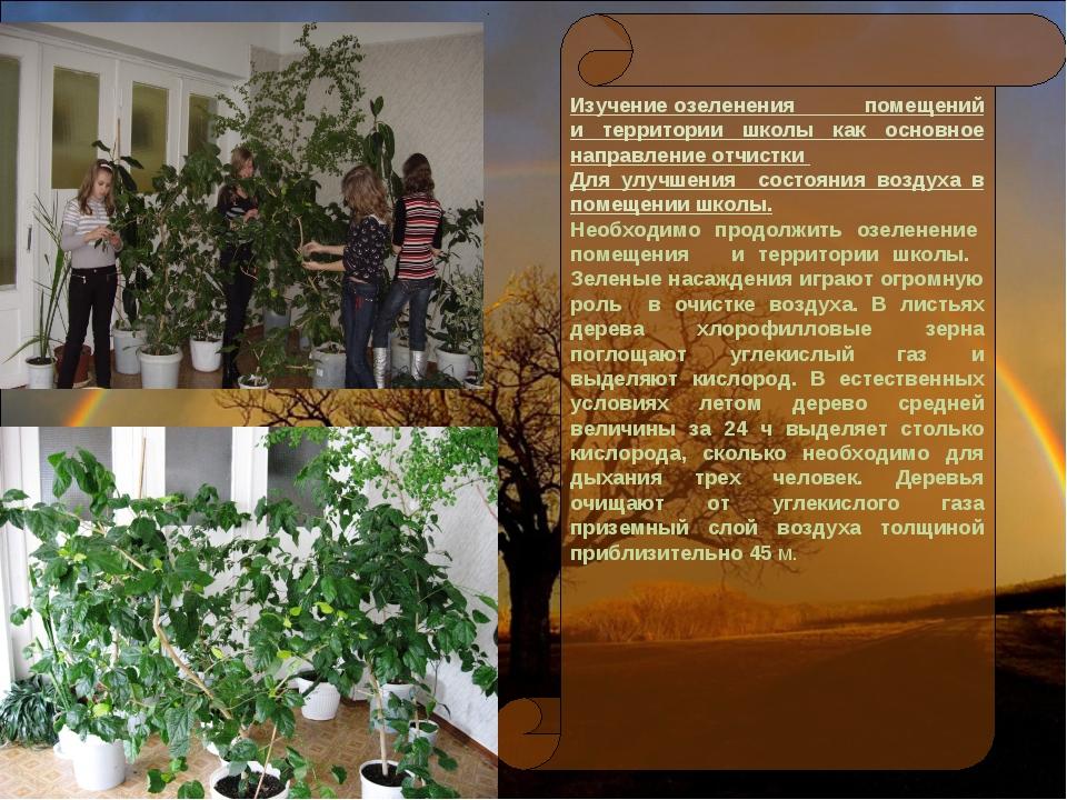 Изучение озеленения помещений и территории школы как основное направление отч...