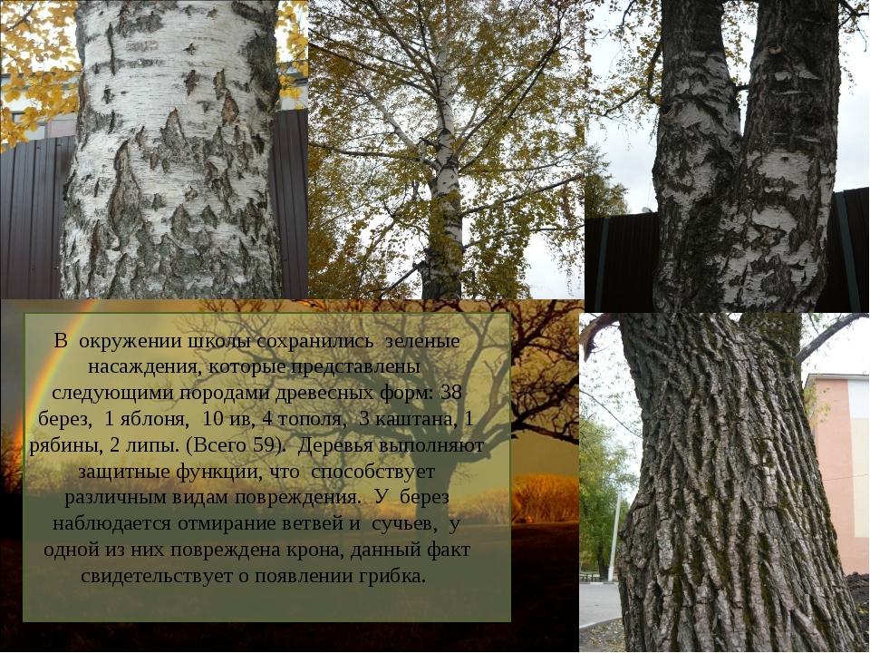 В окружении школы сохранились зеленые насаждения, которые представлены следую...