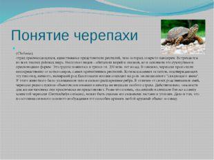 Понятие черепахи (Chelonia), отряд пресмыкающихся, единственные представители