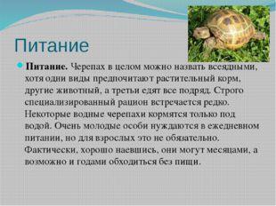 Питание Питание.Черепах в целом можно назвать всеядными, хотя одни виды пред