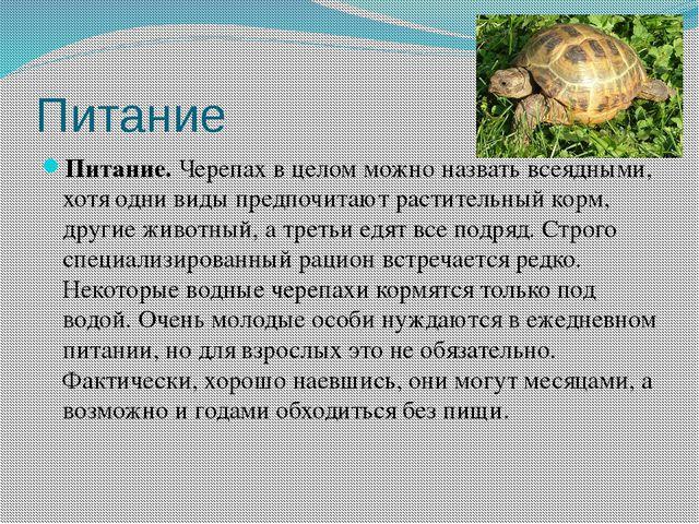 Питание Питание.Черепах в целом можно назвать всеядными, хотя одни виды пред...