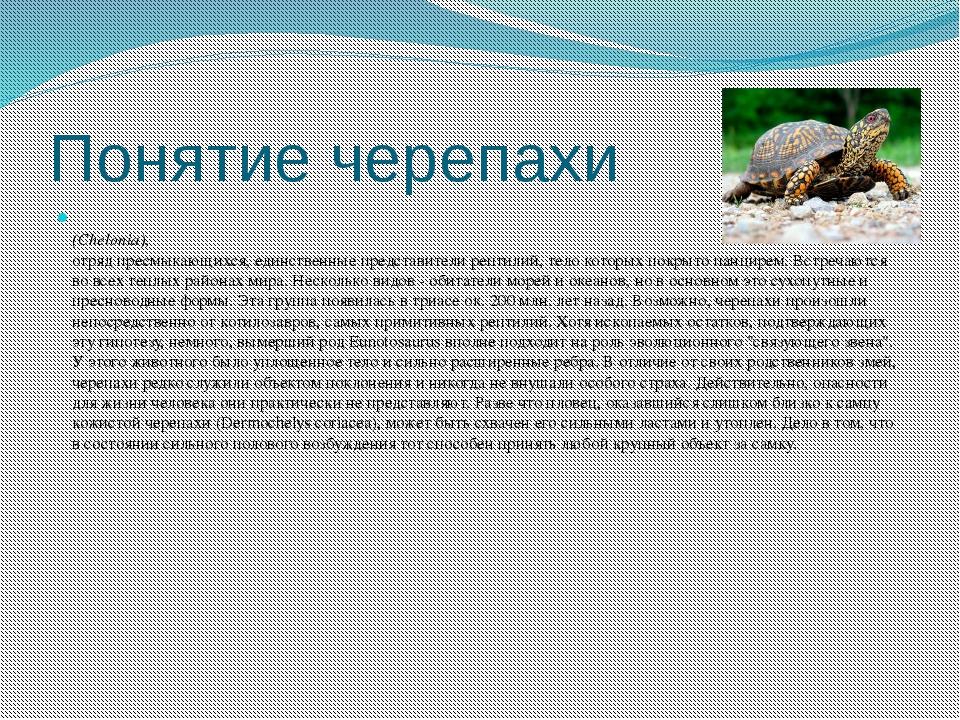 Понятие черепахи (Chelonia), отряд пресмыкающихся, единственные представители...
