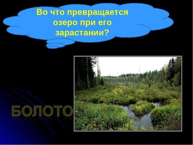 Во что превращается озеро при его зарастании?