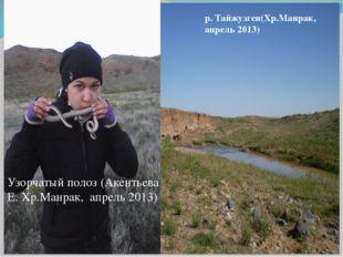 Узорчатый полоз (Акентьева Е. Хр.Манрак, апрель 2013) р. Тайжузген(Хр.Манрак,