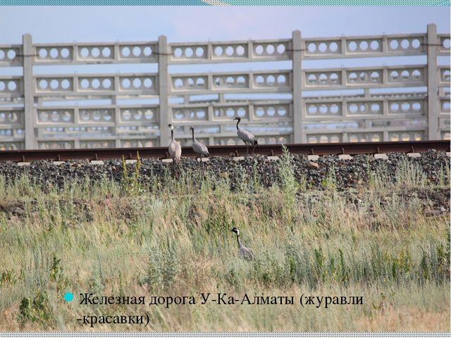 Железная дорога У-Ка-Алматы (журавли -красавки)